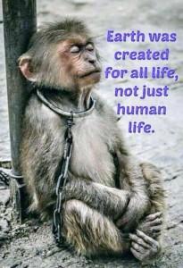 Monkey - originally published indiansnews.com